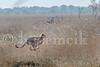 Zambia 06-28-2015-0107