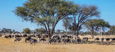 Zimbabwe 07-02-2015-0049