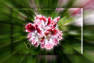 w Blossom-01 for web