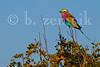 Zimbabwe 06-30-2015-0121
