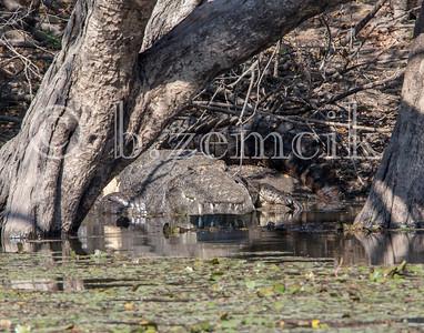Zambia 06-29-15 0104 11x14