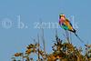 Zimbabwe 06-30-2015-0139