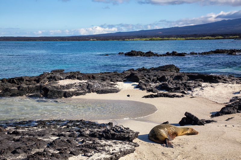 Sea Lion Sleeping on Beach
