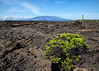 Volcano and Lava Fields