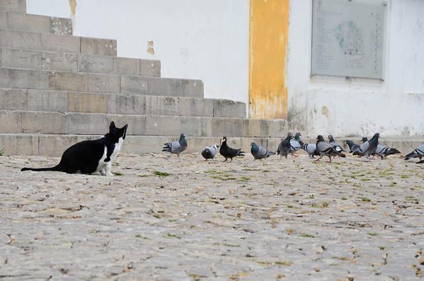Sintra, Portugal  Shari Lovell Photography