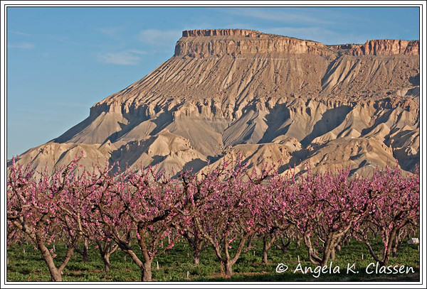 "April Featured Photo - ""Mt. Garfield and Peach Blooms"""