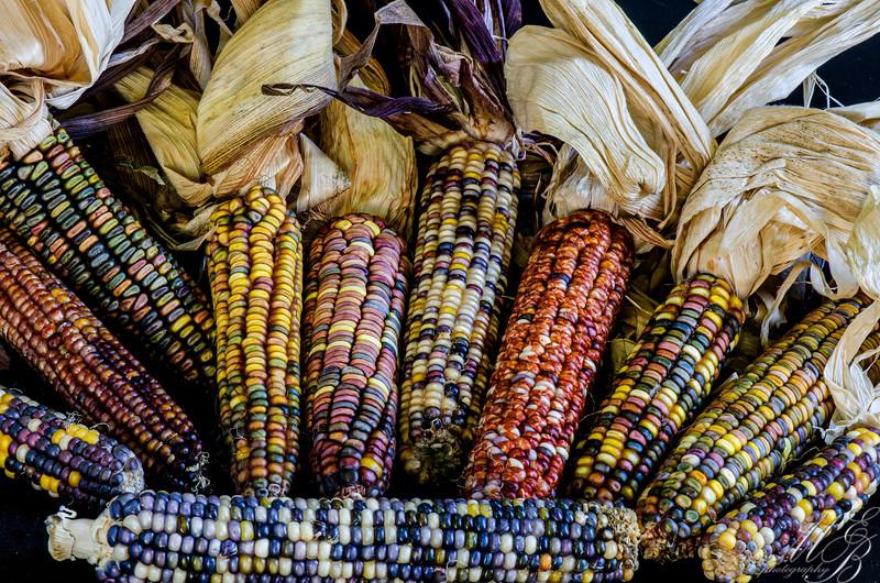 Oranamental Corn Earth Tones Dent