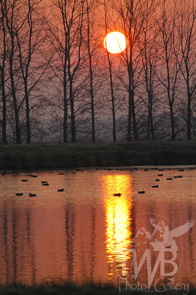sunrise over the Missouri wetlands
