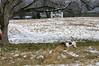 Feb Snow Training 052