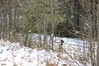 Feb Snow Training 055