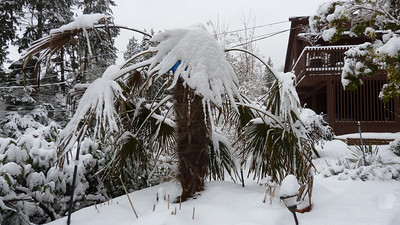 February 2011 snowfall
