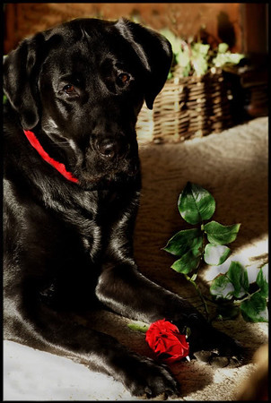 """Valentine's Day: """"The  Bachelor""""<br /> <br /> Photographer's Name: J.R. Rosencrans<br /> Photographer's City and State: Alexandria, Ind."""