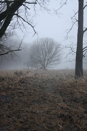 The woods open to a lone tree in a foggy meadow along White River, January 28, 2013<br /> <br /> Photographer's Name: Rachel  Landers<br /> Photographer's City and State: Anderson, IN