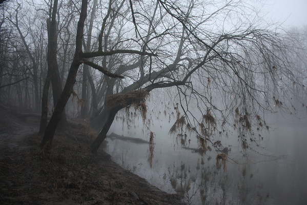 Clumps of grass are suspended in the branches of a tree (due to the recent flooding) along the foggy White River, giving the scene an eerie feeling. January 28, 2013<br /> <br /> Photographer's Name: Rachel  Landers<br /> Photographer's City and State: Anderson, IN