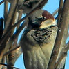 This male house sparrow was enjoying the sun at Harter House.<br /> <br /> Photographer's Name: Rita Drews<br /> Photographer's City and State: Anderson, Ind.