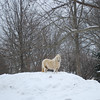 Patty, a four-year-old miniature horse, taken 2/16/14<br /> <br /> Photographer's Name: Jenee Wilber<br /> Photographer's City and State: Anderson, Ind.