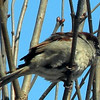 This house sparrow is sure enjoying the sun.<br /> <br /> Photographer's Name: Rita Drews<br /> Photographer's City and State: Anderson, Ind.