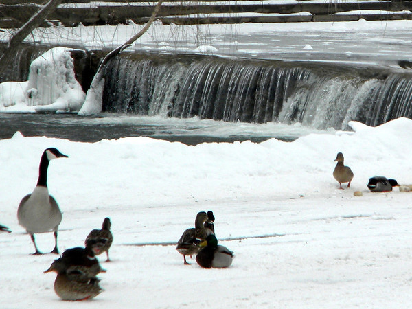 Falls Park and friends, Feb. 2014.<br /> <br /> Photographer's Name: Rita Drews<br /> Photographer's City and State: Anderson, Ind.