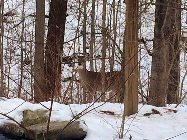 A deer at Mounds State Park.<br /> <br /> Photographer's Name: Sammie Blevins<br /> Photographer's City and State: Anderson, Ind.