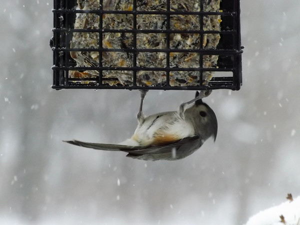 Hang in there; next month is spring. My bird feeder in Richland Township.<br /> <br /> Photographer's Name: J.R. Rosencrans<br /> Photographer's City and State: Alexandria, Ind.