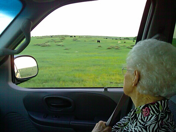 Took Grandma up see the cows and wheat.