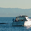 Whale watching trip abaord the Voyager out of Redondo Beach Harbor, January 20, 2013. Photo © Bernardo Alps/PHOTOCETUS/All rights reserved.