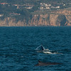 Whale watching trip aboard the Voyager out of Redondo Beach Marina, CA, February 22, 2013. Photo © Bernardo Alps/PHOTOCETUS. All rights reserved.
