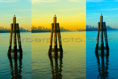 birdie on buoy triptych copy