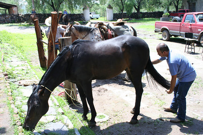 jorge with the horses at the hacienda.  lagos de moreno, jalisco.