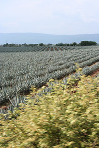 the agave fields from the train.  tequila, jalisco.