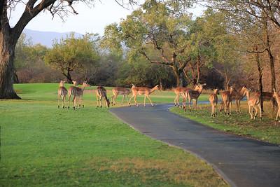 Leopard Creek Golf Club, South Africa