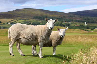 Brora Golf Club, Scotland