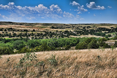 Pine Ridge Landscape