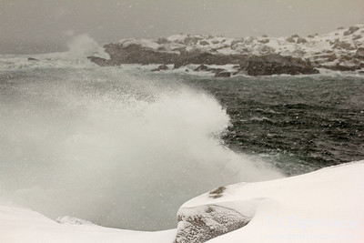 Blizzard waves, winter storm near Peggy's Cove, Nova Scotia.