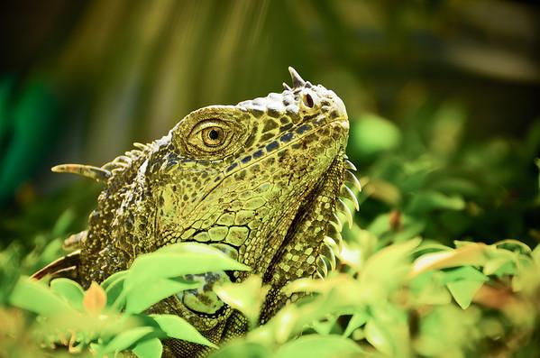 Jungle Lizard (12x18)