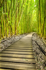 Bamboo Forest Boardwalk (18x12)