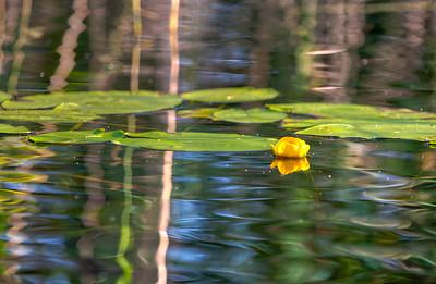 Flower, rural Finland