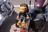 Harley Bear?????