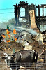 One of the cows at Graceland Dairy Farms on the Penley Corner Road in Auburn waits to be milked after an early morning blaze destroyed the house and several barns at the century old farm.