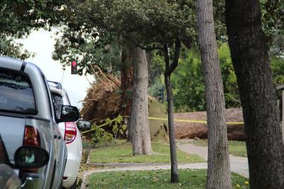 Wind Storm Dec 2011