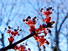Maple Flowers, The Yard, Kennebunk ME