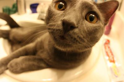 Dynamo in The Sink, Again...