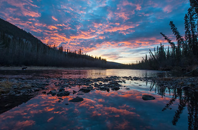 Early morning light paints the sky as a young Grizzly wades into the Fishing Branch River looking for her breakfast.