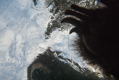 This is what a salmon sees right before it is eaten by a Grizzly Bear.
