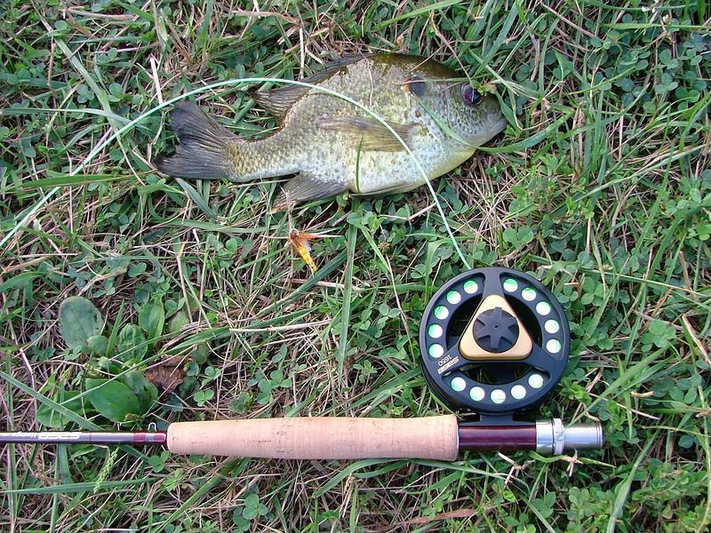 "Doc's pond 10"" bluegill 7-17-10"