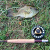 "Doc's pond 10"" bluegill 7-17-10"