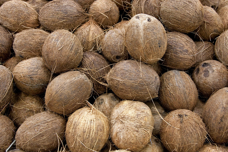 coconut-10