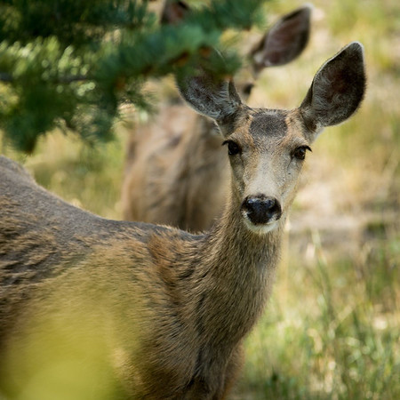 There is always some type of beautiful #wildlife to photograph when we visit #EstesPark (More at pomranka.net/blog)