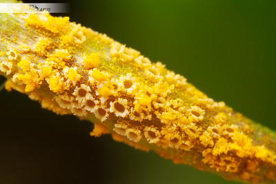 Fungus on Flower Stem