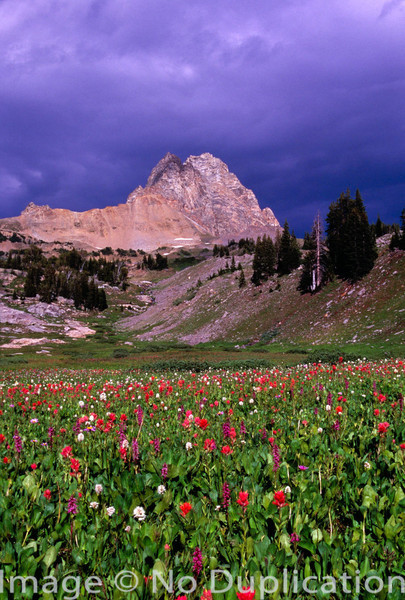 A field of wildflowers in the Tetons